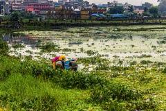 21 août 2014 - agriculteurs dans le lac Phewa dans Pokhara, Népal Images stock