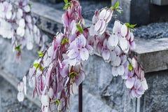 Ao?t 2018 le Japon Inuyama Arbre de souhait au Japon pr?s du temple, arbre de souhait japonais Texte en japonais photographie stock libre de droits