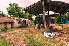 25 août 2014 - ville rurale de Sauraha, Népal Image libre de droits