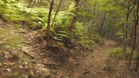Aokigahara/Jukai skog Japan lager videofilmer