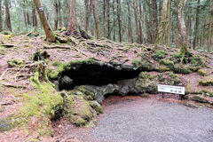 Aokigahara skog royaltyfria bilder
