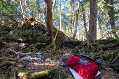 Aokigahara suicide forest royalty free stock photo