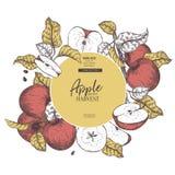 aopples手拉的横幅  夏天收获传染媒介葡萄酒被刻记的样式 秋天庭院果子和莓果 秋天 图库摄影