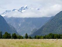 Aoraki, la crête la plus élevée de cuisinier de Mt des Alpes méridionaux, NZ photographie stock libre de droits