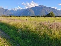 Aoraki monteringskock bak en enorm grässlätt royaltyfri foto