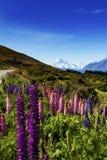 Aoraki Mount Cook on New Zealand Royalty Free Stock Photo