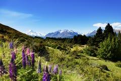 Aoraki Mount Cook New Zealand Stock Image