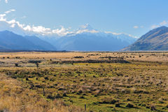 Aoraki-Mount Cook Royalty Free Stock Photography