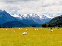 Aoraki, Mt Cook highest peak of Southern Alps, NZ Stock Photo