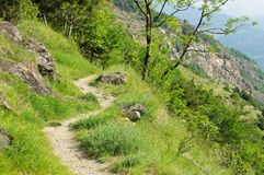Aosta Valley hiking track Stock Image