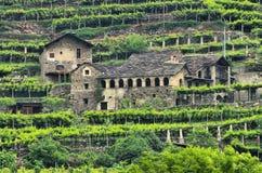 Aostatal vineyard Royalty Free Stock Images