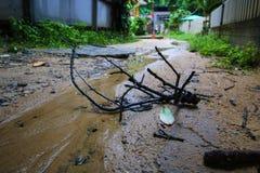 após chovido Imagens de Stock