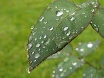 Após a chuva Fotografia de Stock Royalty Free