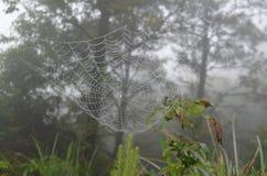 Spiderweb Imagens de Stock