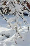 Após a chuva de congelação Fotos de Stock