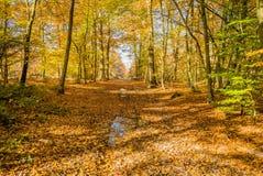 Após a chuva na floresta de Fontainebleau fotografia de stock