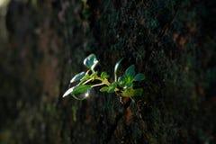 Após a chuva, uma árvore pequena fotografia de stock