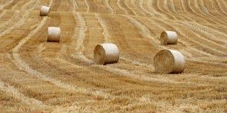 Após a colheita Imagem de Stock
