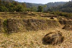 Após a exploração agrícola da colheita Imagens de Stock