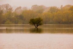 Após a inundação Imagem de Stock