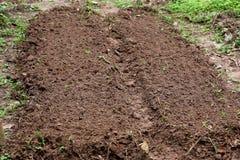 Após minha casa, há um vegetal que cresça no jardim Imagem de Stock