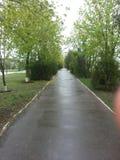 Após a mola da chuva Fotos de Stock Royalty Free