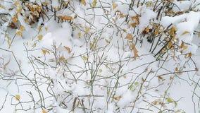 Após o batismo frio, a vegetação verde incandesce com vitalidade fresca, e os ramos estão no contraste afiado com a cor de t fotografia de stock royalty free