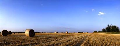APÓS o Colheita-Panorama Fotografia de Stock