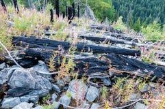 Após o incêndio florestal imagens de stock