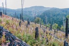 Após o incêndio florestal foto de stock royalty free