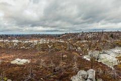 Após o incêndio florestal Fotos de Stock Royalty Free