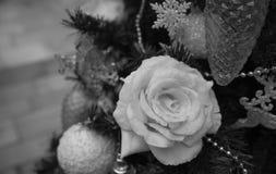 Após o Natal Fotografia de Stock