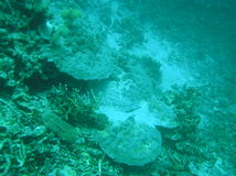 Após o tsunami de Coral Reefs Fotos de Stock