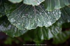 Após a queda da chuva Imagens de Stock