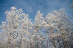 Após a queda de neve Imagem de Stock Royalty Free