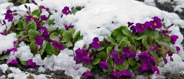 Após a tempestade de neve Fotografia de Stock