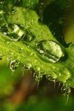 Após uma chuva do verão Foto macro de gotas da água Foto de Stock Royalty Free