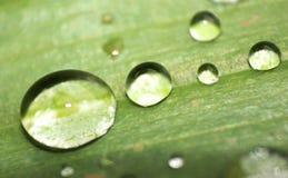 Após uma chuva em uma folha Fotografia de Stock