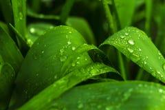 Após uma chuva em uma folha Fotos de Stock Royalty Free