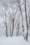Após uma noite nevado Fotos de Stock Royalty Free