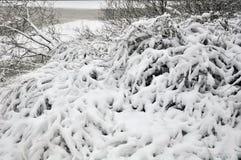 Após uma queda de neve Fotos de Stock Royalty Free