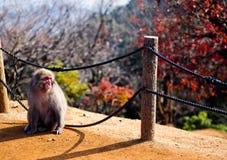 Apa för ensamt berg på Sunny Day Arkivfoto
