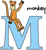 apa för alfabetdjur M Arkivfoton