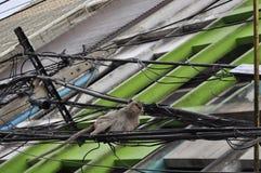 Apa i den Lopburi staden, Thailand Royaltyfria Bilder