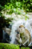 Apa i djungel Royaltyfria Foton