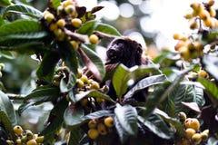 Apa i ett träd Fotografering för Bildbyråer