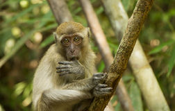 Apa i nationalparken av Thailand Royaltyfria Foton