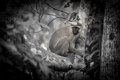 Apa i trädet arkivfoto