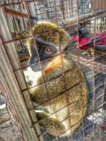 Apa i zooen Royaltyfri Bild