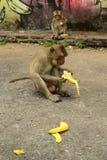 Apa med bananen fotografering för bildbyråer